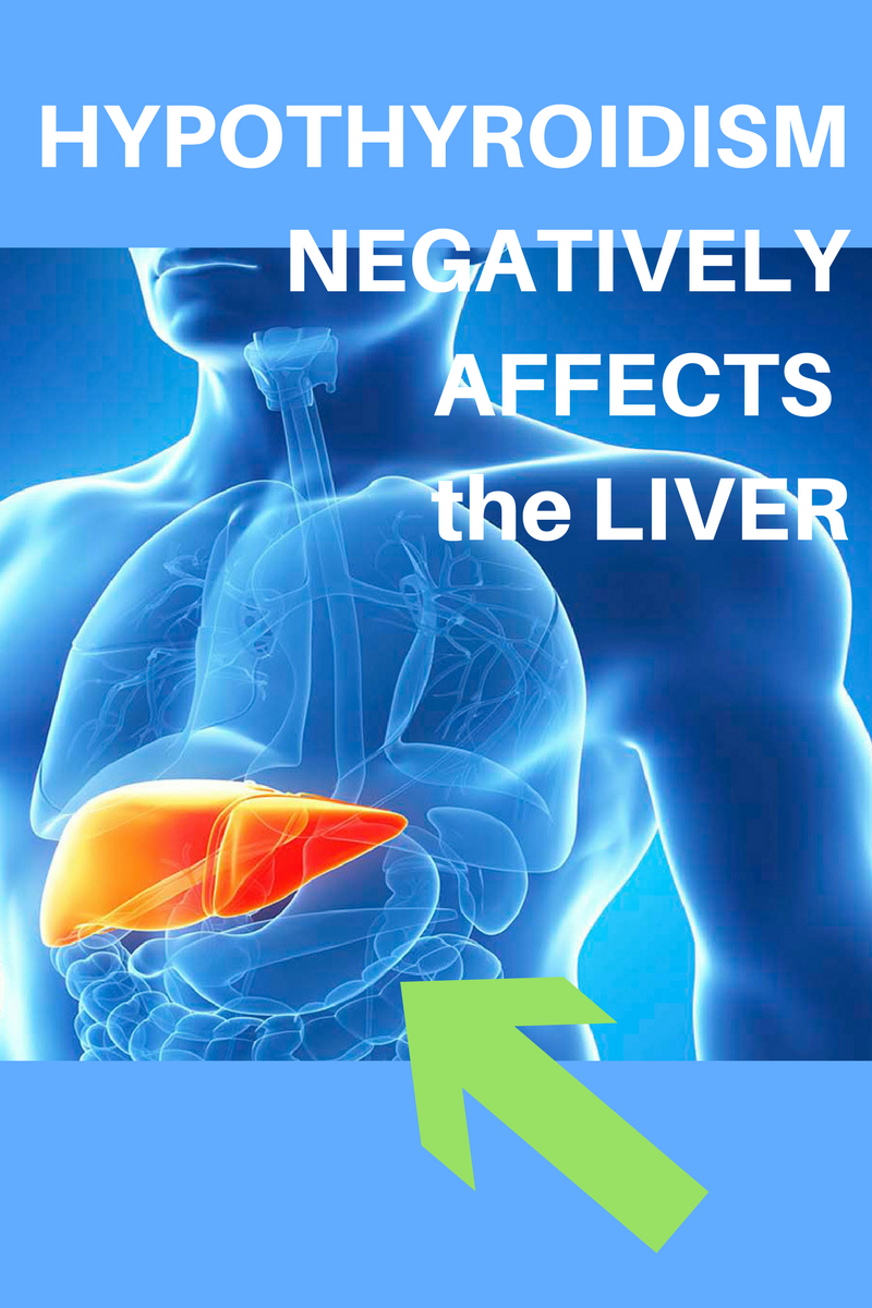 Liver Synthroid