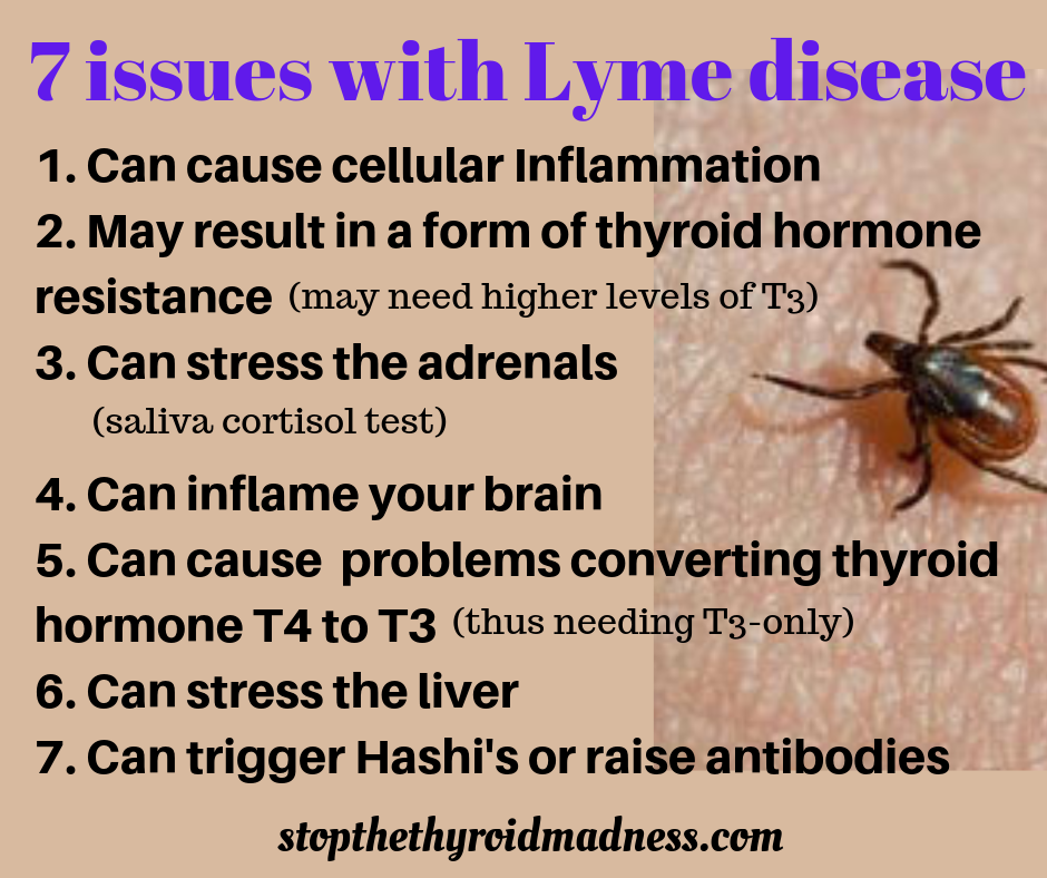 LYME DISEASE and its connection to THYROID/ADRENAL PROBLEMS